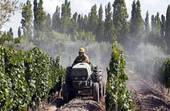 Pesticides : la France mauvaise élève