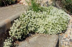 Phytothérapie : les plantes pour des soins de support