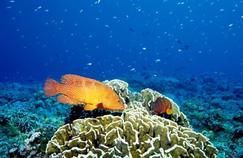 Des poissons sauvages atteints de cancers de la peau