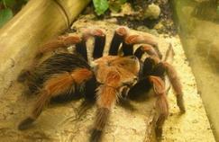Une thérapie pour dépasser la phobie des araignées