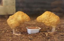 Ce que contiennent vraiment les nuggets de poulet