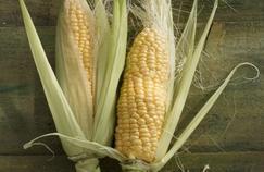 Où sont les OGM dans l'alimentation humaine?