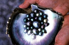 Tahiti veut améliorer la qualité de ses perles noires