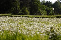 Chauve-souris, tritons, greenkeepers : le golf de Chantilly au cœur des enjeux de la biodiversité