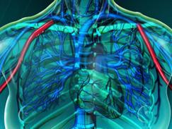 Artère axillaire