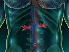 Artère hépatique