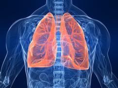 Les poumons pendant l'effort