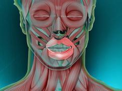 Orbiculaire de la bouche