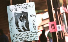 Beethoven et le trésor perdu