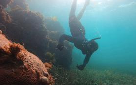 Coquillages & crustacés, la mer sur un plateau