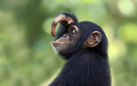 L 'Asile des singes perdus