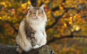 Le big bêtisier 100 % chats