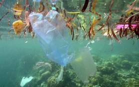 Plastic partout ! Histoires de déchets