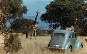 Anne Dagg, la passion des girafes