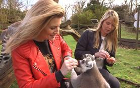 100 jours avec les animaux du zoo de Thoiry