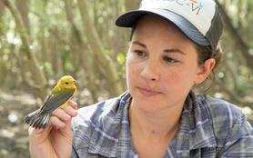 Panamá, la passerelle des animaux migrateurs