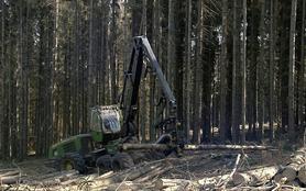 Hitze, Stürme, Käferplage - Das Waldsterben geht weiter