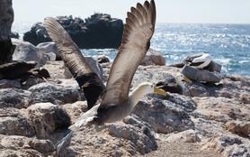 Galapagos, l'archipel sauvage