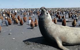 Carnet des terres Australes