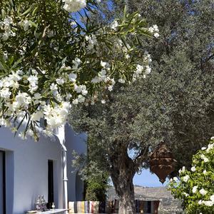 visitez la maison de r ve de jade jagger ibiza madame figaro. Black Bedroom Furniture Sets. Home Design Ideas