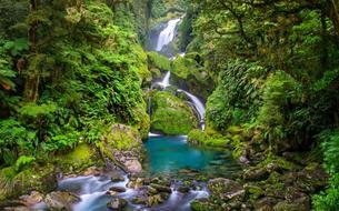 Spectaculaires paysages en Nouvelle-Zélande dans les forêts de Jade
