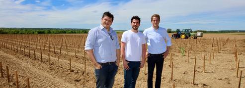La Winerie Parisienne inaugure le premier vignoble professionnel d'Ile-de-France, à Davron, dans les Yvelines