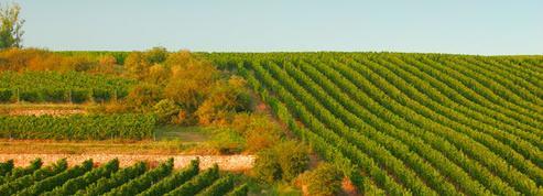 L'INRA présente quatre pieds de vigne anti-pesticides et fait déguster son vin