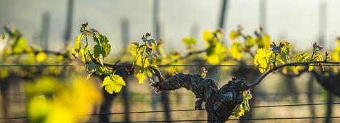5 chardonnay étonnants produits à Bordeaux