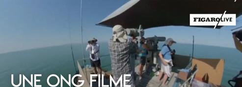 Six marsouins filmés au large du Mexique par l'ONG Sea Shepherd