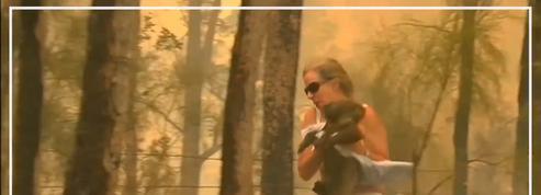 Une femme sauve un koala des flammes en Australie