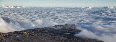Terra : l'ode au vivant de Yann Arthus-Bertrand