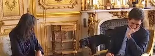 Nemo, le chien d'Emmanuel Macron urine en pleine réunion à l'Elysée