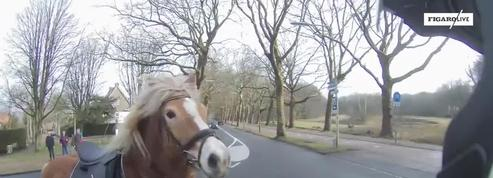 La folle course poursuite entre un cheval et un scooter