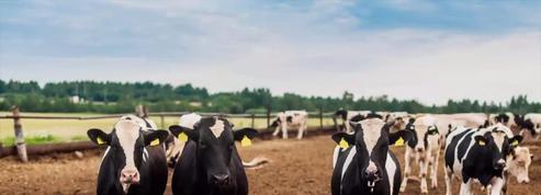 Cause animale : Manifestations contre les abattoirs en France