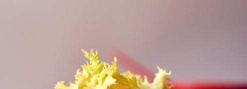 Tartare de dorade, sablés parmesan