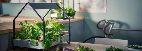 Créer un potager dans sa cuisine, le nouveau plaisir en ville