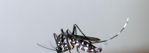 Un premier cas de dengue contracté en métropole dans le Var