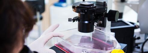 Régénérer le coeur avec les cellules souches