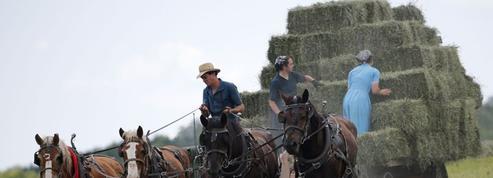 L'atout secret des Amish contre l'asthme