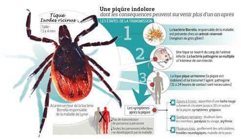 Comment se prot ger de la maladie de lyme - Araignee rouge traitement naturel ...