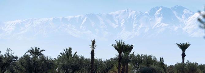 Parcours royal à l'ombre des palmiers de Marrakech