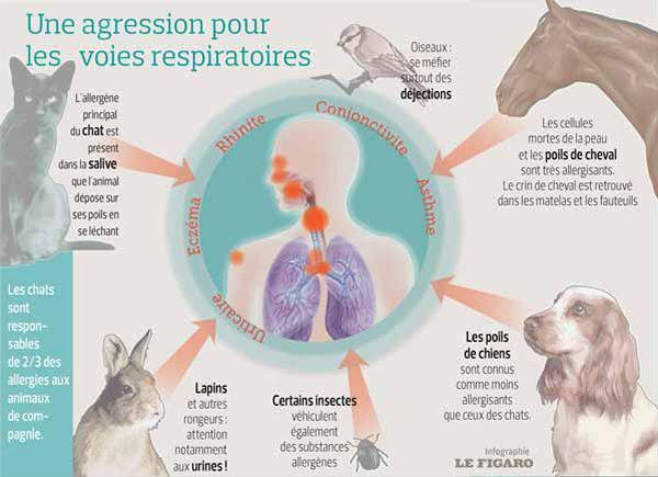 Infographie présentant les allergies aux animaux