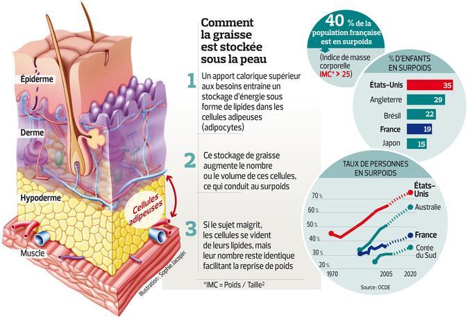 Cette infographie explique le mécanisme de l'obésité