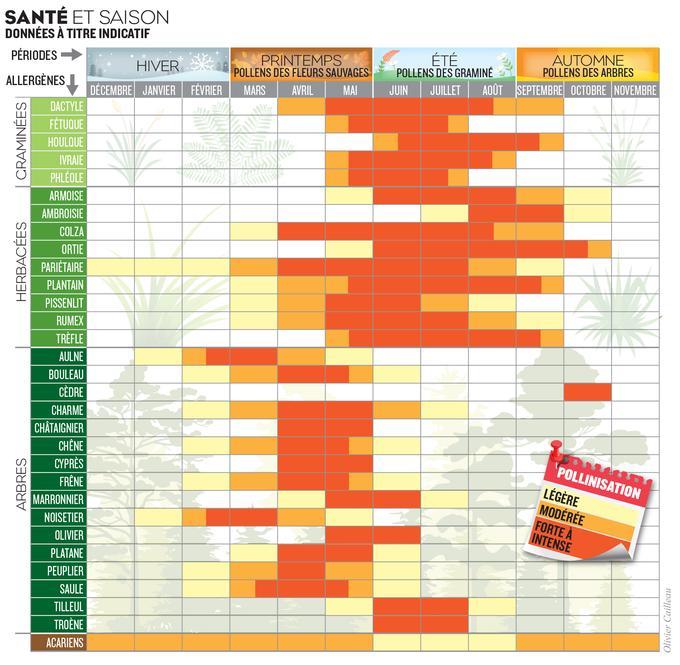 Il s'agit d'un planningf détaillant les allergies suivant le moment de l'année où elles surviennent