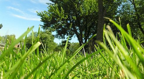 fausse herbe rigolo avec grassfiti dessinez sur votre pelouse sans la couper tech numerama with. Black Bedroom Furniture Sets. Home Design Ideas
