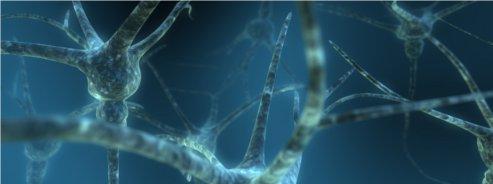 100 milliards de neurones dans un cerveau
