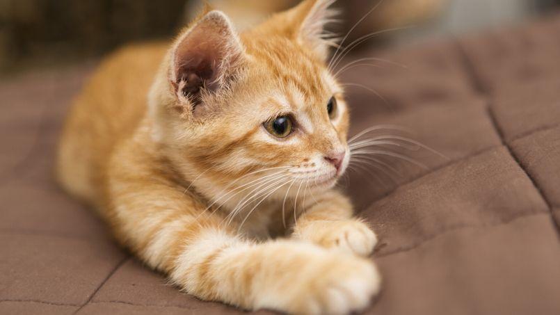comment vivre avec son chat en appartement. Black Bedroom Furniture Sets. Home Design Ideas