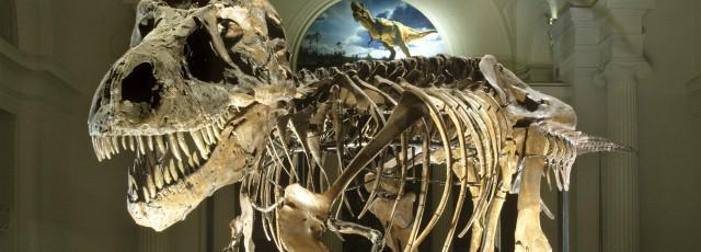 Les 5 plus impressionnants fossiles de dinosaures à avoir été découverts
