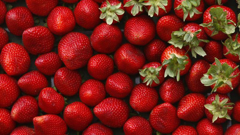 des cultures de fraise trait es l 39 aide d 39 insecticides. Black Bedroom Furniture Sets. Home Design Ideas