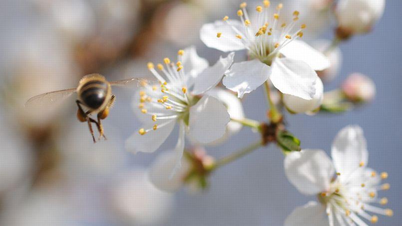 un label bee friendly pour sauver les abeilles. Black Bedroom Furniture Sets. Home Design Ideas